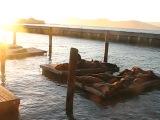 Сан-Франциско (Pier39) - Морские Котики