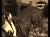 конкур.выездка. конный спорт. (2)